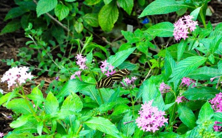 Botanical Gardens-0018