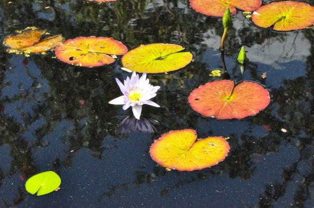 Botanical Gardens-0039