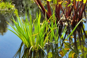 Botanical Gardens-0042