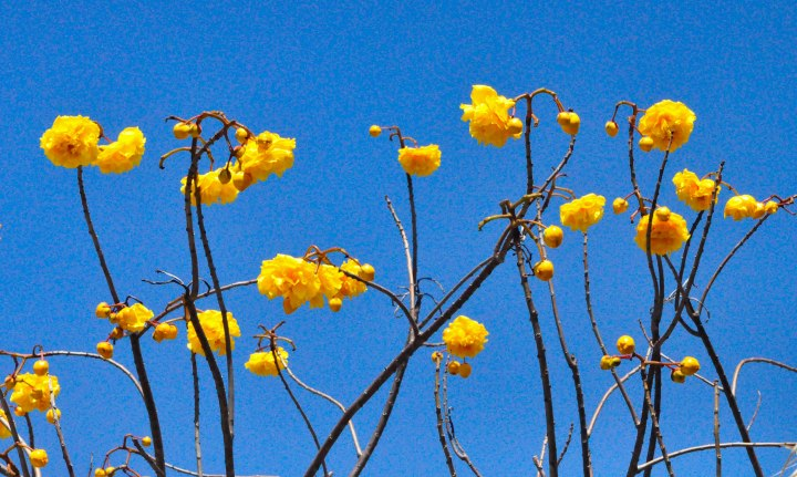 Botanical Gardens-0118