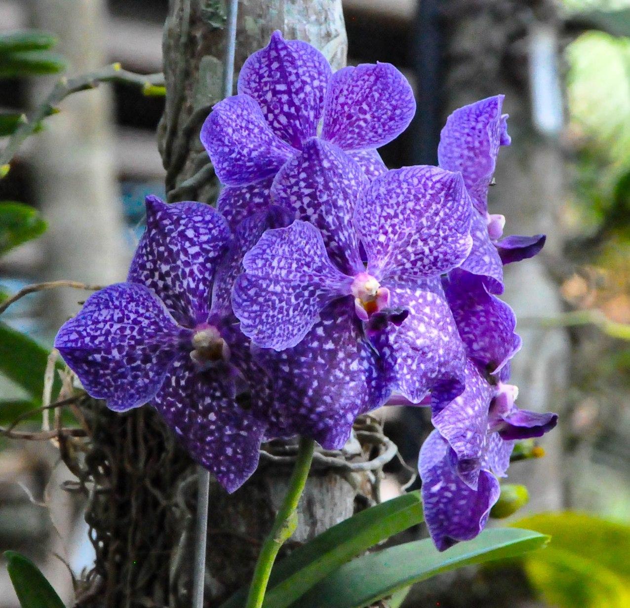 Botanical Gardens-0148