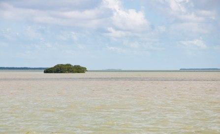 Everglades-0063