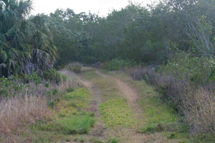 Everglades-0096