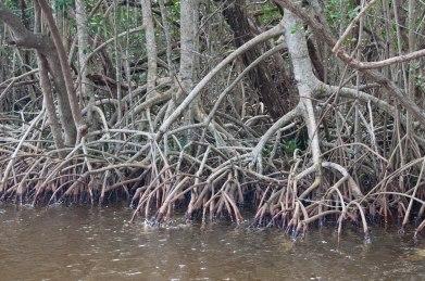 Everglades-0167