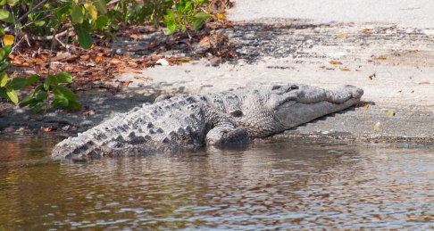 Everglades-0193