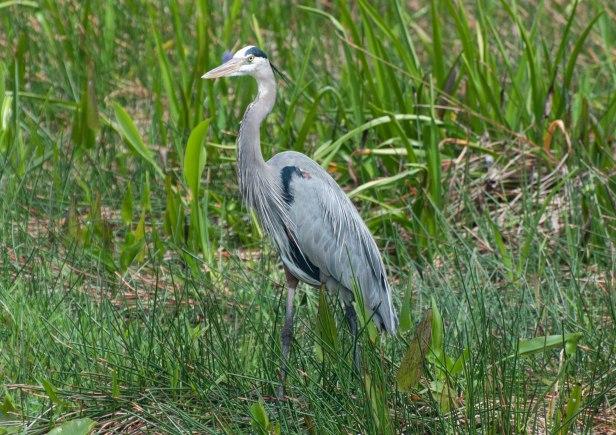 Everglades-0336