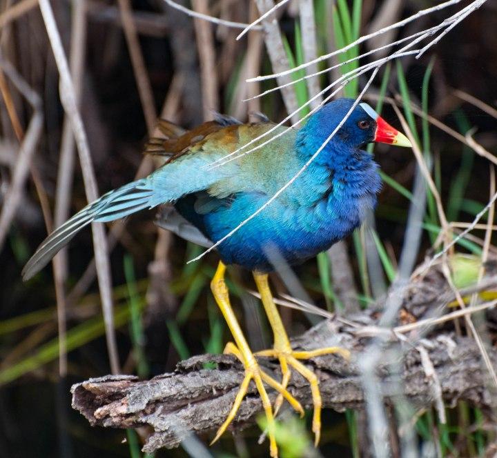 Everglades-0387