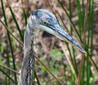 Everglades-0404