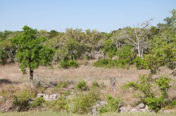 Hill Country-0782