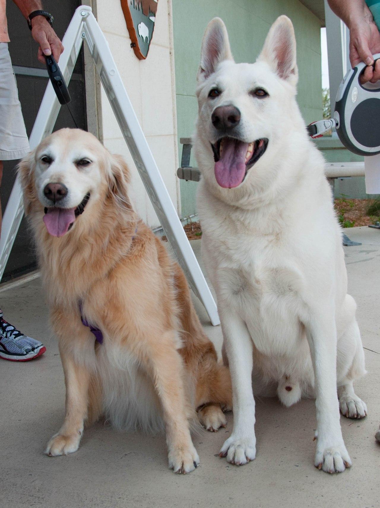 Canine Travelers: Layla &Nikko