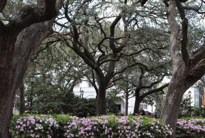 Savannah-0111