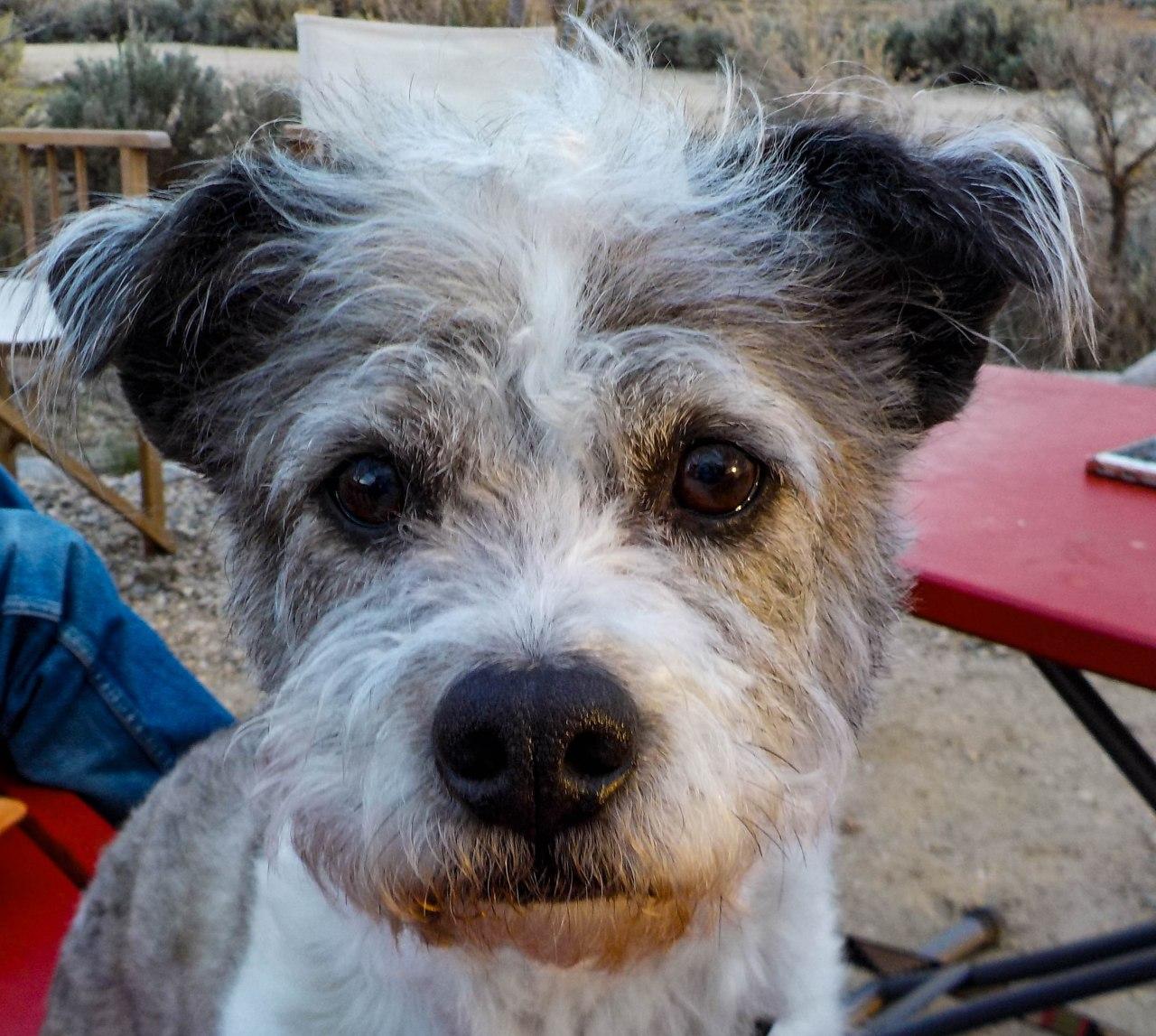 Canine Traveler:  Gilligan