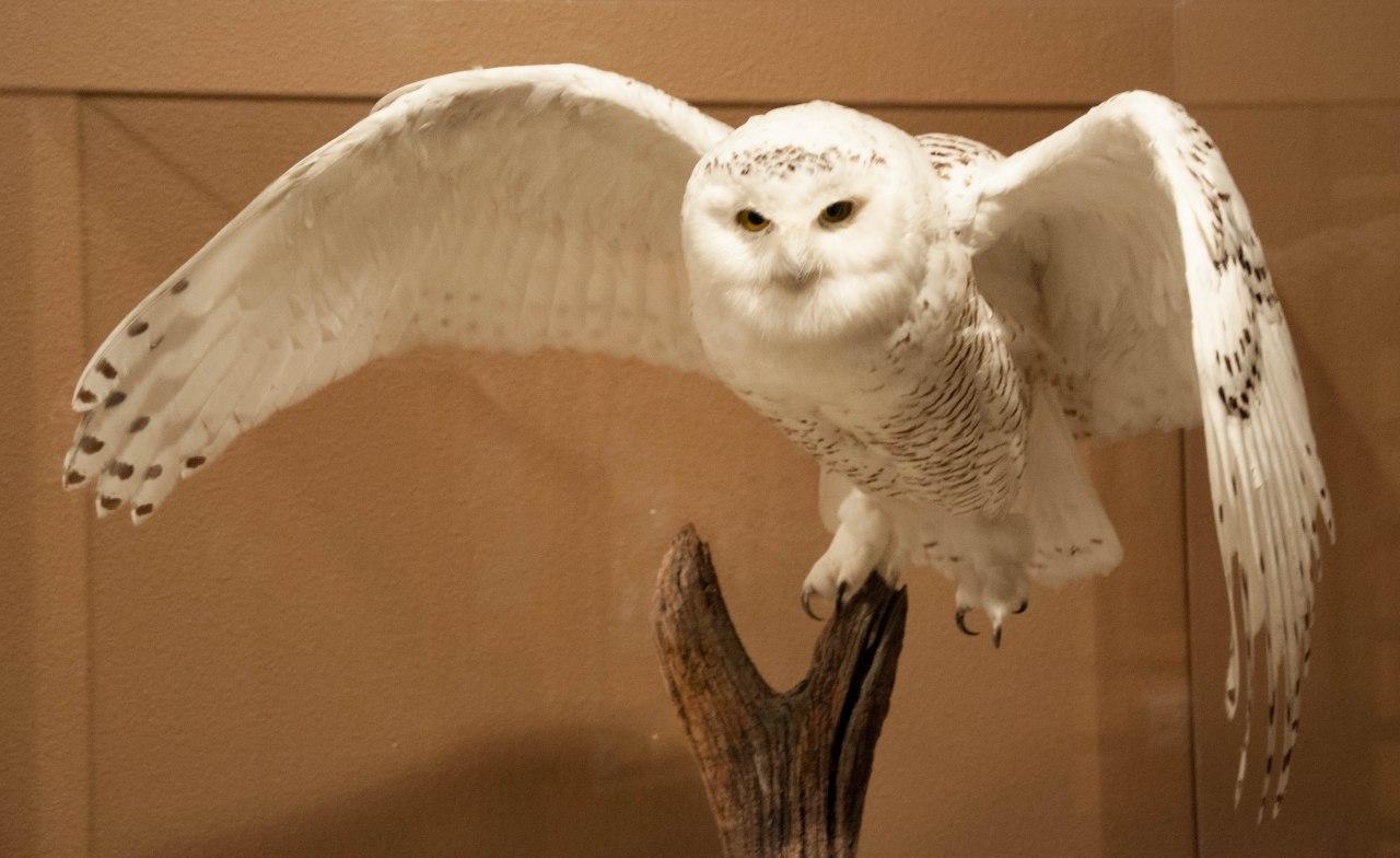 Draper Natural HistoryMuseum