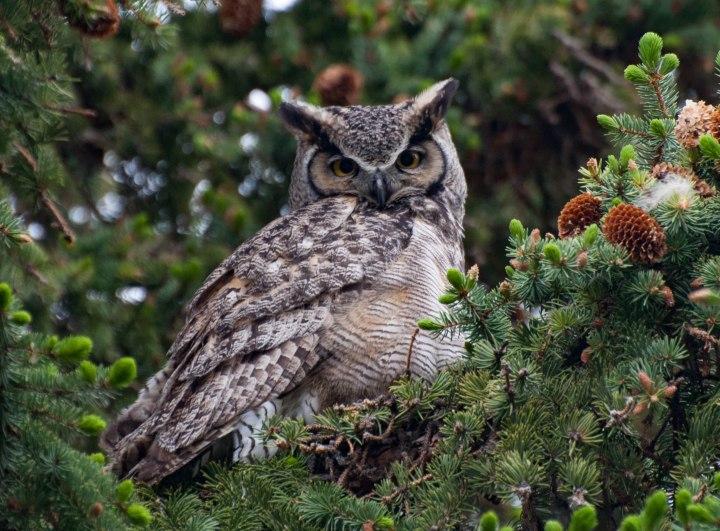 Owls-0005-2