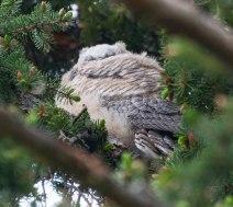 Owls-0057